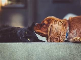 a cat and a dog: same species, but definite differences