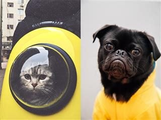 an image of a cat next to an image of a dog. can AI tell them apart?