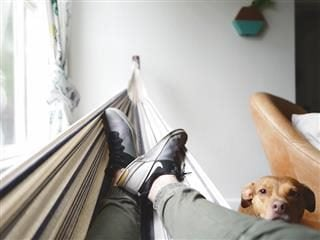 person's legs in a hammock with a pup facing the camera