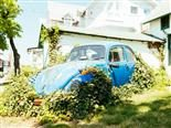 old Volkswagen bug covered in vines
