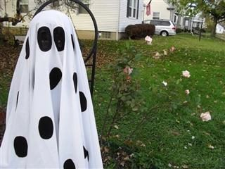 kid on a lawn in a Charlie Brown ghost costume (white sheet with a lot of holes inked on in black ink)