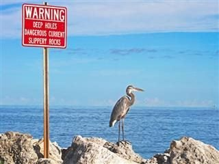 heron standing on the rocks next to a warning sign