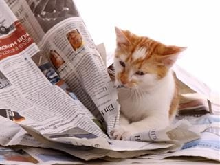 Cat scratches away at newspapers.