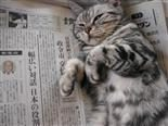A cat lays on its backside on top of a newspaper.