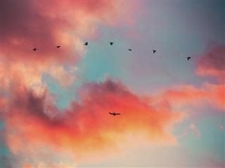 a line of birds and a plane fly in front of a series of clouds at sunset