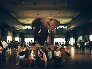 Everyone is ignoring the elephant in the room