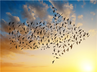 Birds migrating south in the shape of an arrow - cloud migration concept